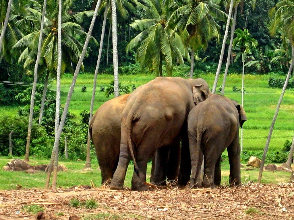 Chatroulette Sri Lanka El Internet charlar ms divertido