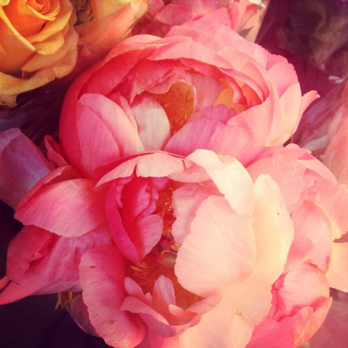 Beautiful Peonies